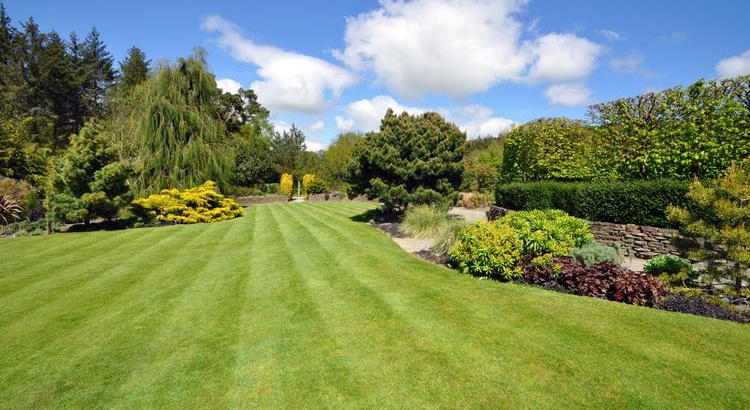 Beautiful lawn and garden-LR
